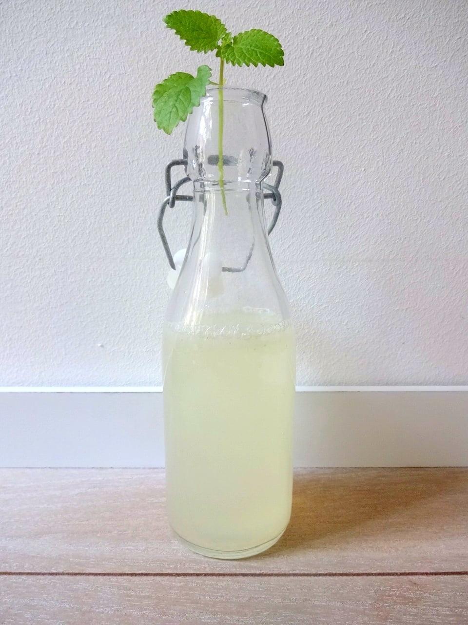 Limetten-Ingwer-Limo